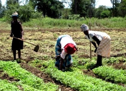 Water-Efficient-Maize-for-Africa